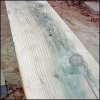 Blue-stained Southern Pine lumber